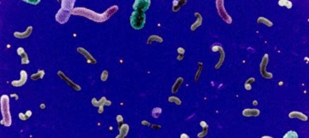 morrisbacteria_pba