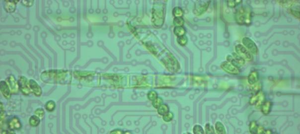 phytoplankton-chips