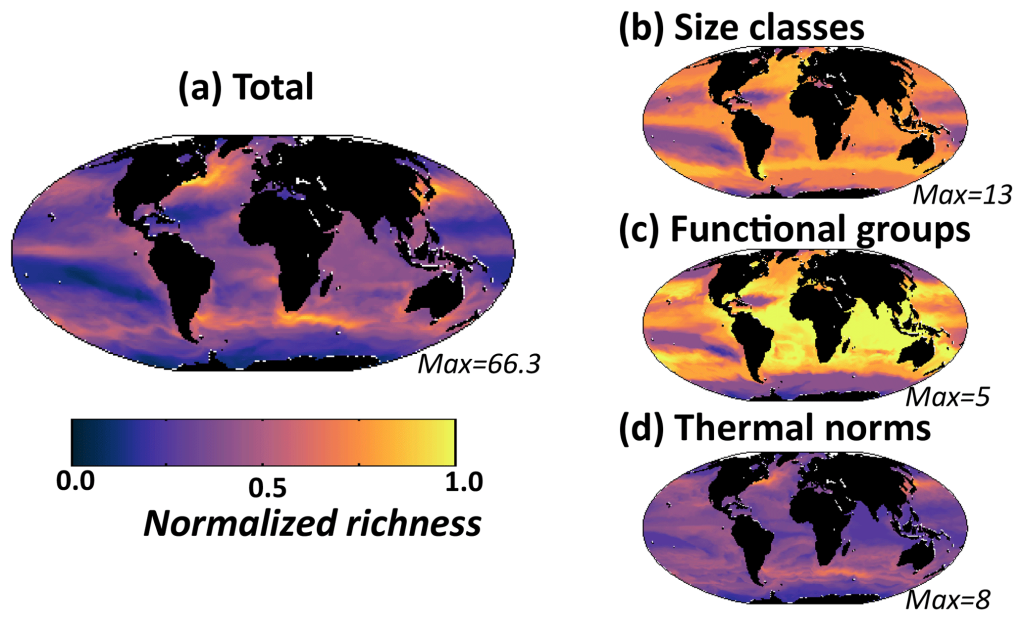 Model diversity measured as annual mean normalized richness in the surface layer. Normalization is by the maximum value for that plot (value noted in the bottom right of each panel). (a) Total richness determined by number of individual phytoplankton types that coexist at any location; (b) size class richness determined by number of coexisting size classes; (c) functional richness determined by number of coexisting biogeochemical functional groups; (d) thermal richness determined by number of coexisting temperature norms - Image courtesy: The researchers.